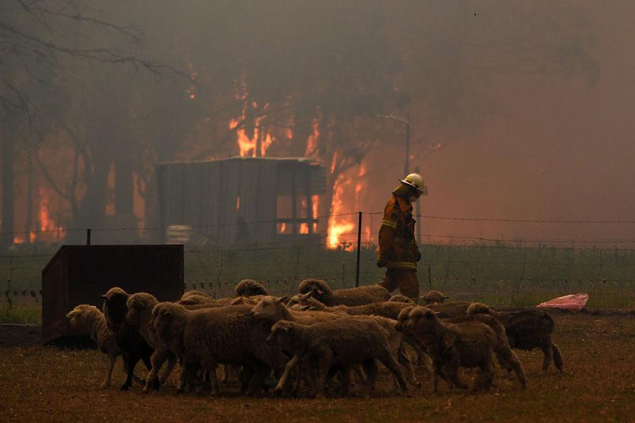 Tahmoor, NSW. Image: Dean Lewins via Reuters