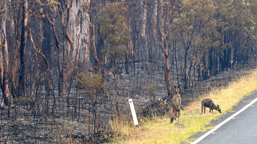 Wollemi National Park, NSW. Image: Jeremy Piper, EPA.