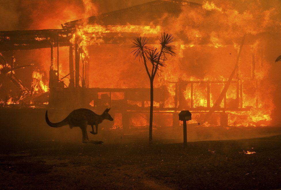 Conjola NSW. Image: Matthew Abbott, New York Times / Redux / eyevine