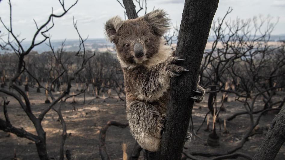 Kangaroo Island, SA. Image: Brad Fleet. Source: The Australian