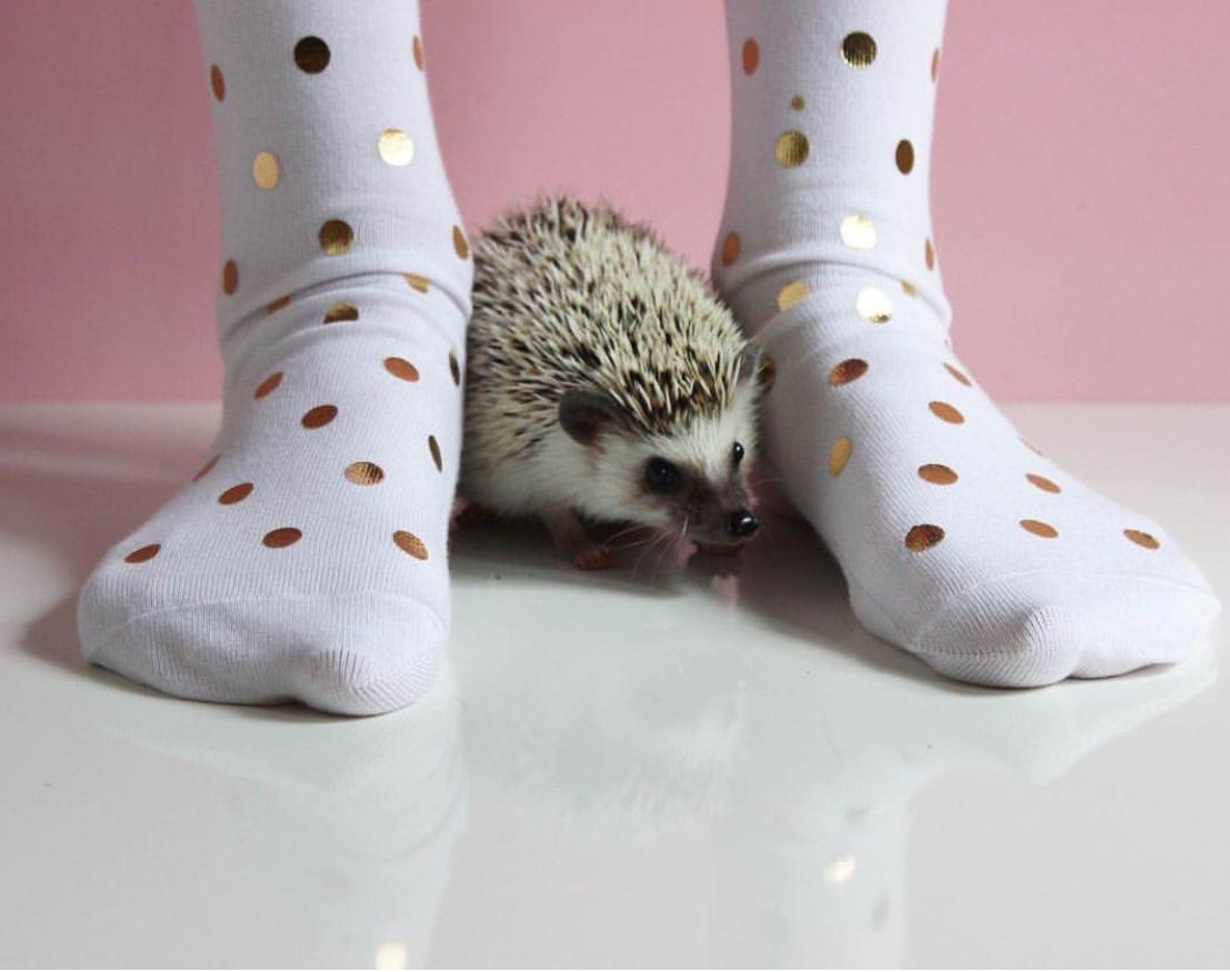 "Happy Socks. Photo:  <a href=""http://www.instagram.com.adventuresofcalico/"" target=""_blank"">Adventures of Calico</a>"